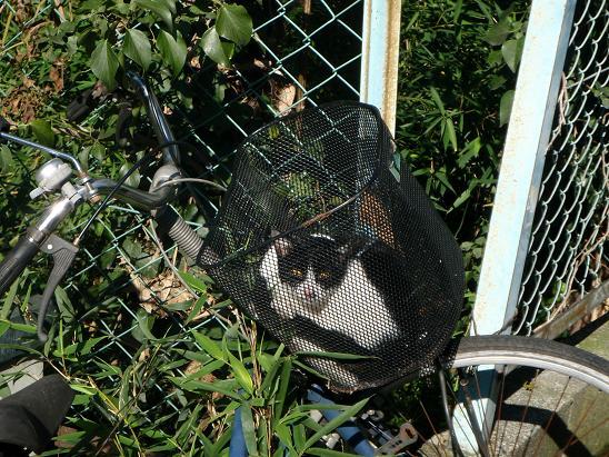 籠猫.jpg