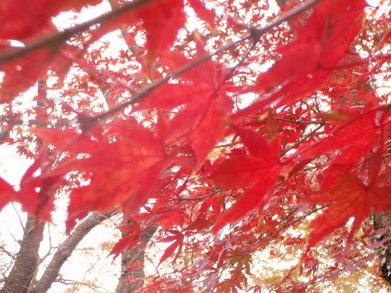 紅葉吹雪.jpg