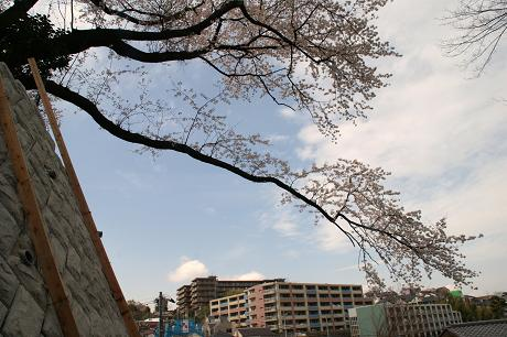 逆さ桜の正体.jpg